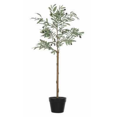 Olive Plant in Pot - Birch Lane