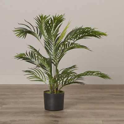 Areca Palm Tree Floor Plant - Wayfair