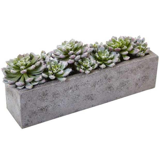 Succulent Garden with Textured Concrete Planter - Home Depot