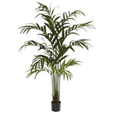 Kentia Palm Tree in Pot - Wayfair