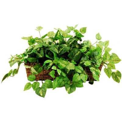 Deluxe Greenery Desk Top Plant in Basket - Wayfair