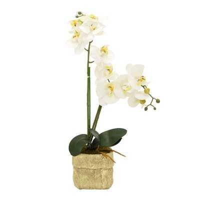 Faux Orchid Desktop Flowering Plastic Plant in Pot - Wayfair