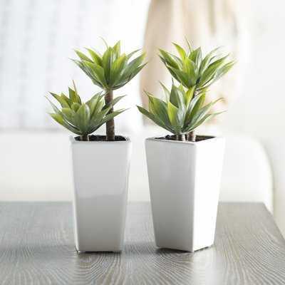 Mini Agave Desktop Plant in Planter - AllModern