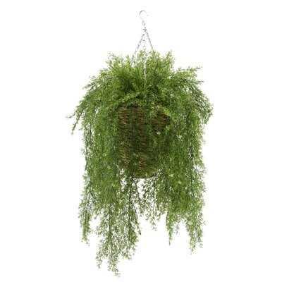 Faux Asparagus Fern in Reed Hanging Basket Ivy Plant - Wayfair