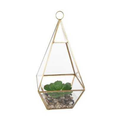 Hanging Succulent Plant in Glass Tri Terrarium - Wayfair