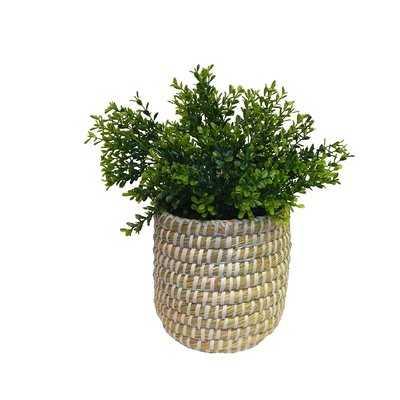 Faux Desktop Boxwood Plant in Modern Sea Grass Basket - Wayfair