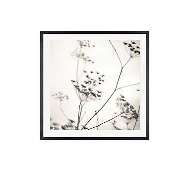 """Natures Drawing by Lupen Grainne, 25 x 25"""", Wood Gallery, Black, Mat - Pottery Barn"""
