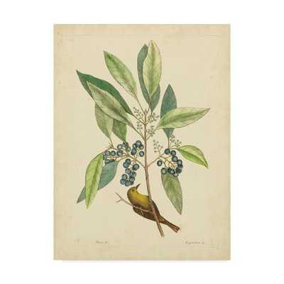 'Bird and Botanical V' Print on Wrapped Canvas - Wayfair