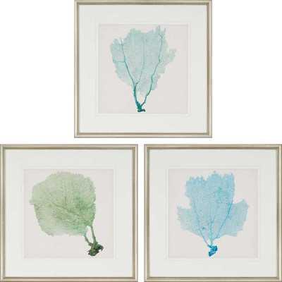 Sea Fan I Giclee' Framed Graphic Art Set - Wayfair