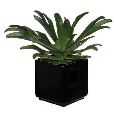 , Staghorn Agave Faux Eva Succulent In Black Ceramic Vase - Wayfair