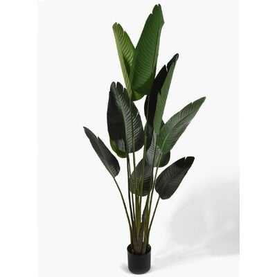 Banana Leaf Plant in Pot - Wayfair