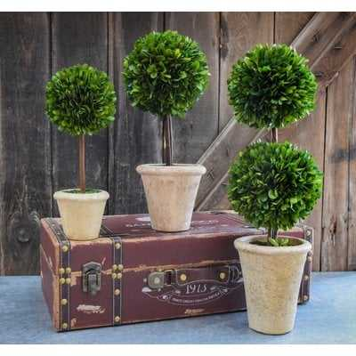 Preserved Boxwood Faux Topiary - Birch Lane
