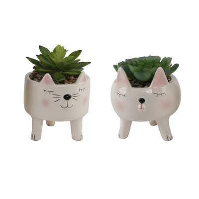 2 Piece Cat Succulent Desktop Plant in Pot Set - Wayfair