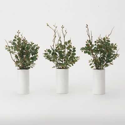 Pistachio Plant in Decorative Vase - Wayfair