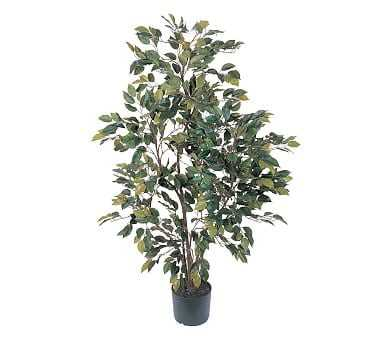 Faux Potted Ficus Tree - Pottery Barn