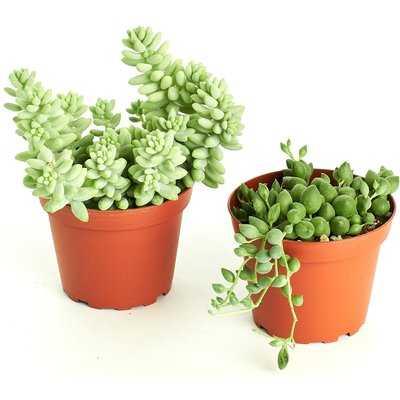 2 Piece Hanging Succulent Plant in Pot Set - Wayfair