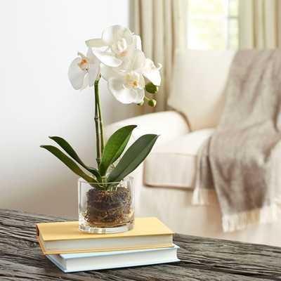 Faux Orchid in Glass Vase - Birch Lane