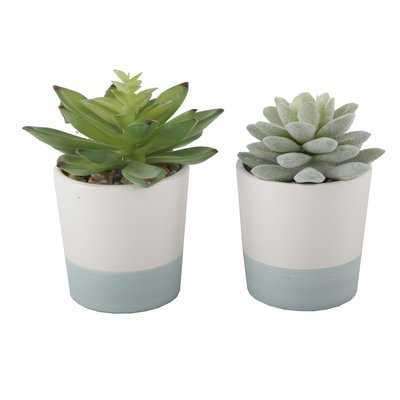 2 Piece Succulent Plant Set - Birch Lane