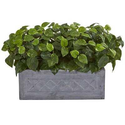 Planterhos Desktop Foliage Plant in Planter - Wayfair