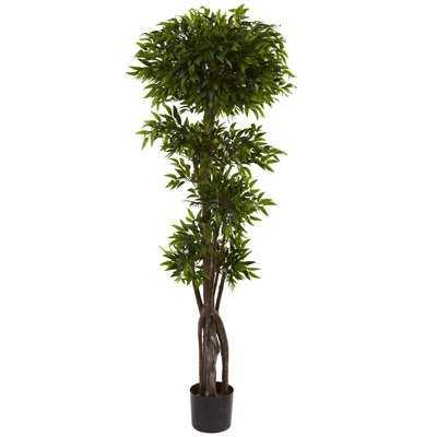 Ruscus Tree in Pot - Wayfair