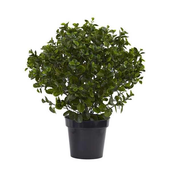 28 in. UV Resistant Indoor/Outdoor Peperomia Plant - Home Depot