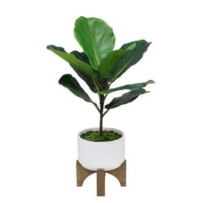 """23"""" Tall Fiddle Leaf  In Ceramic Planter On Wood Stand,White - Wayfair"""