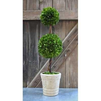 Beyer Preserved Boxwood Faux Topiary - Birch Lane
