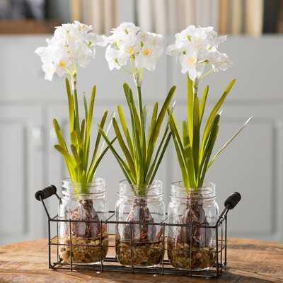 Orchids Floral Arrangement in Glass Jars - Birch Lane
