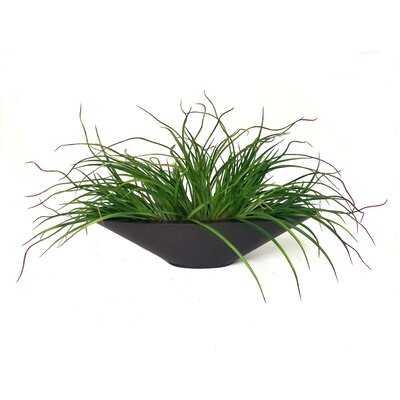 Onion Grass in Pot - Wayfair