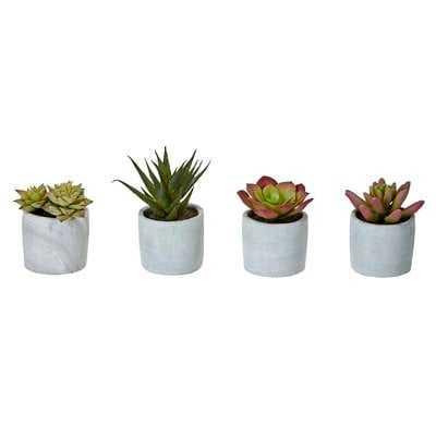 4 Piece Desktop Succulent Plant in Pot Set (Set of 4) - Wayfair