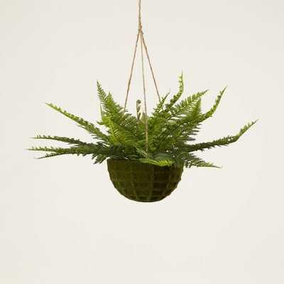 Fern Hanging Plant in Basket - Wayfair