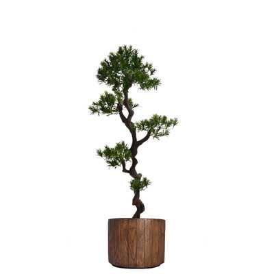 Tall Floor Yacca Tree in Planter - Wayfair