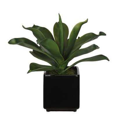 Foxtail Agave Faux Eva Succulent In Black Ceramic Vase - Wayfair