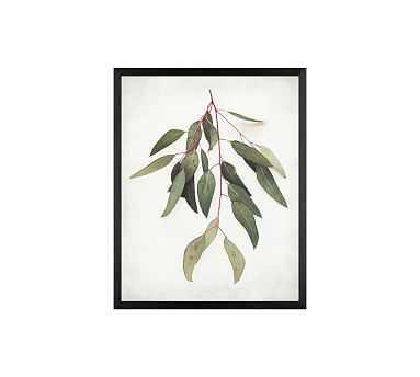 """Eucalyptus Sprig Framed Print by Lupen Grainne, 20x16"""", Wood Gallery Frame, Black, No Mat - Pottery Barn"""