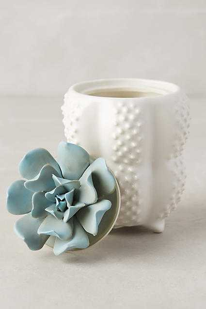Succulent Candle - Moroccan Mint - Anthropologie