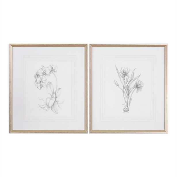 """Botanical Sketches, S/2 - 28"""" x 32"""" - Silver/Taupe Frame with Mat - Hudsonhill Foundry"""