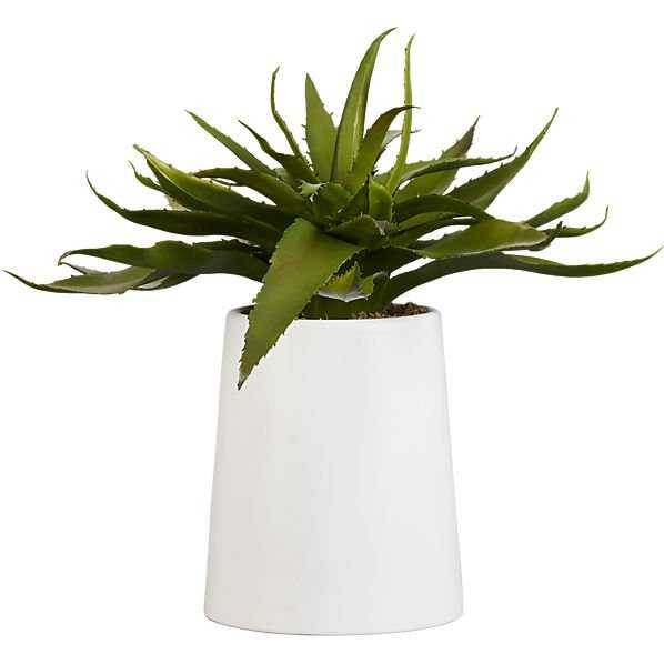 Potted Aloe - CB2