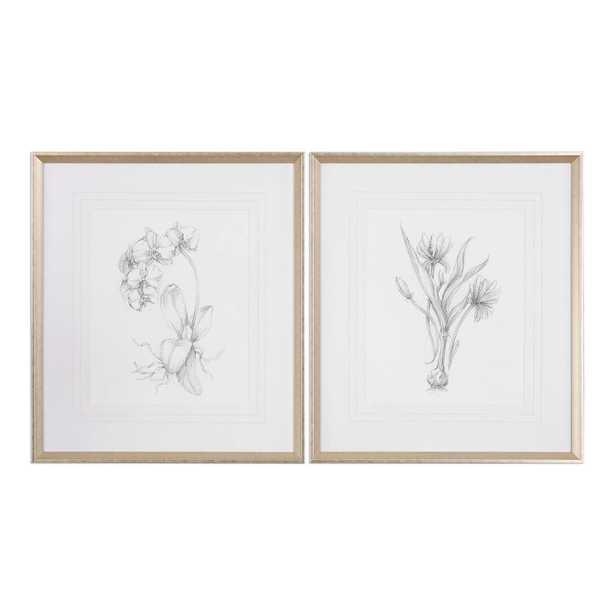 Botanical Sketches, S/2 - 28x32, Framed - Hudsonhill Foundry