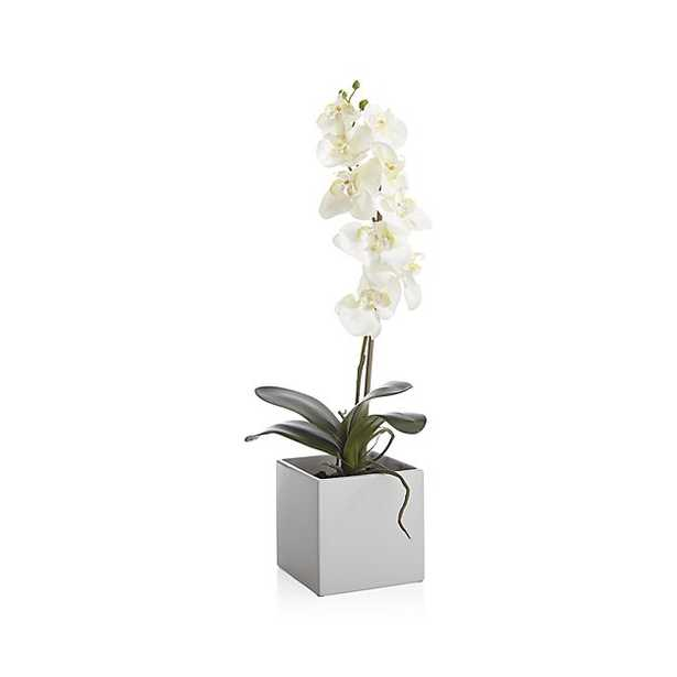 Large Potted Orchid Plant - Crate and Barrel