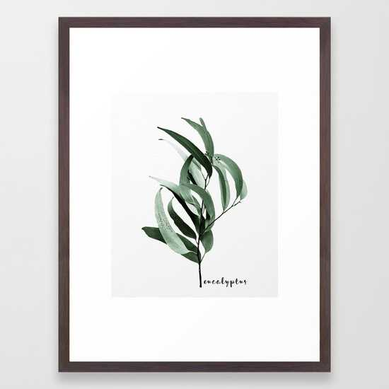 "Eucalyptus - Australian gum tree, Conservation Walnut Frame 20"" x 26"" - Society6"