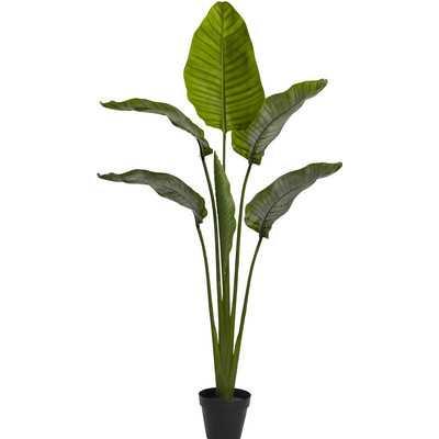 """Travellers Palm Tree in Pot"" - Wayfair"