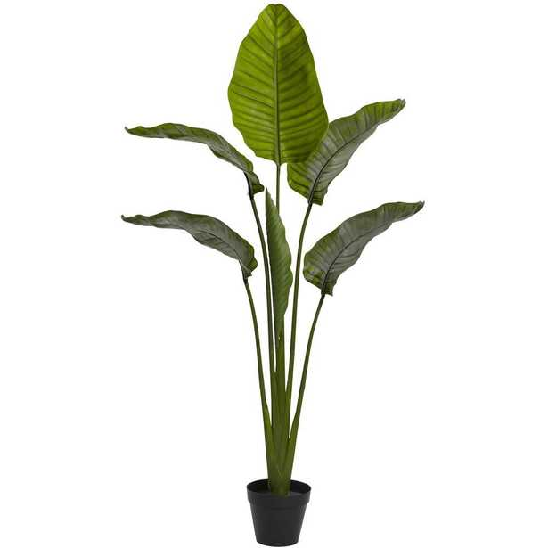 63 in. UV Resistant Indoor/Outdoor Travelers Palm Tree, Green - Home Depot
