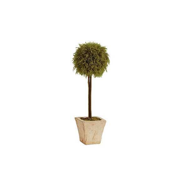 Preserved Lemon Cypress Topiary - Ballard Designs
