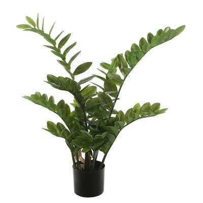 Succulent Zamifolia Plant in Pot - Wayfair