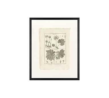 "Botanical Plate 449, 16 x 20"", Wood Gallery, Black, No Mat - Pottery Barn"