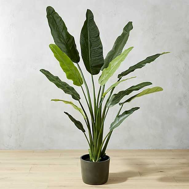"""potted 70"""" bird of paradise - CB2"""