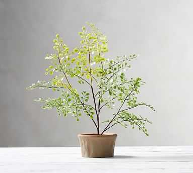 Faux Potted Maiden Hair Fern, Mini Southern - Pottery Barn