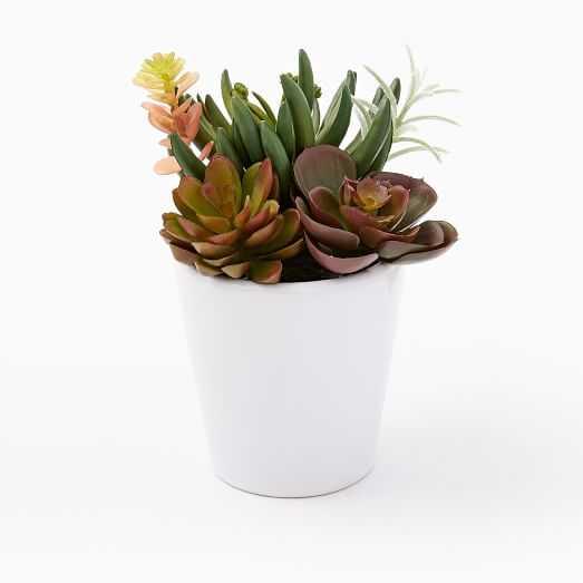 Faux Succulents - Multi - West Elm