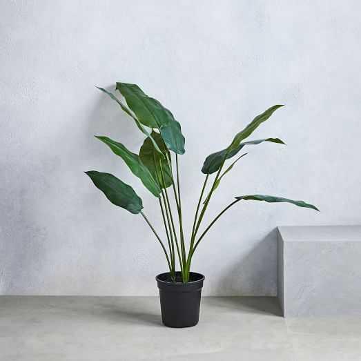 Faux Crane Flower - West Elm