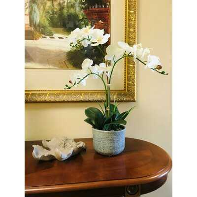 Artificial Orchids Plant in Pot - Wayfair